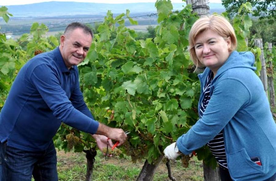 Župan Tomašević i ove godine u berbi grožđa sa učenicima Poljoprivredno-prehrambene škole