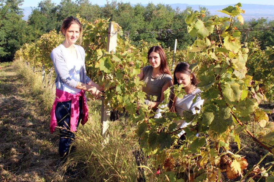 Župan sa učenicima Poljoprivredno-prehrambene škole u berbi grožđa