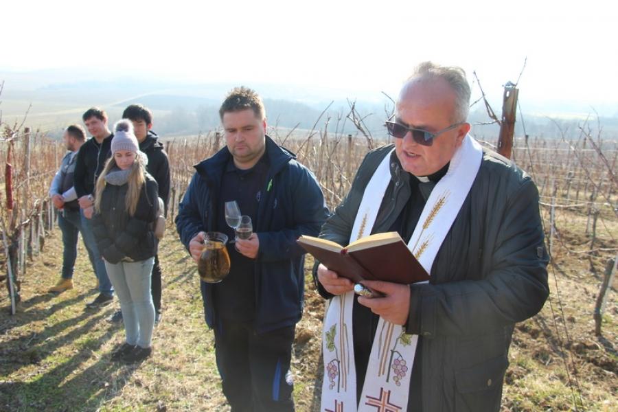 Šestu godinu za redom u vinogradima požeškog Veleučilišta studenti i profesori slave Vincelovo